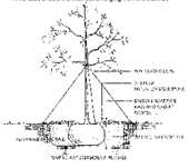 planting & caring for big trees oak tree diagram tree diagram worksheets 3rd grade #10